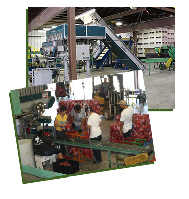 Repacking and Cold Storage images